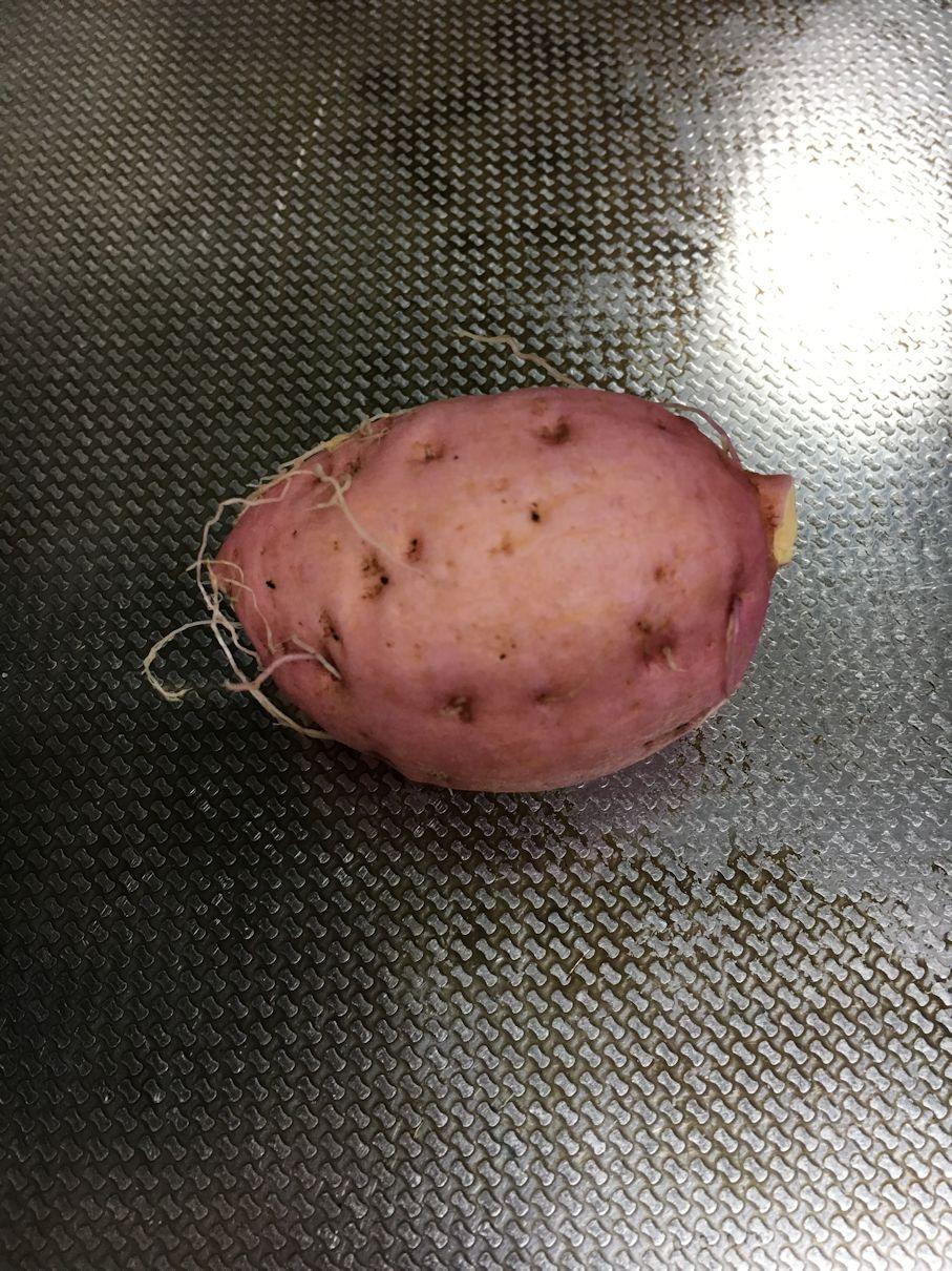 自家栽培の芋